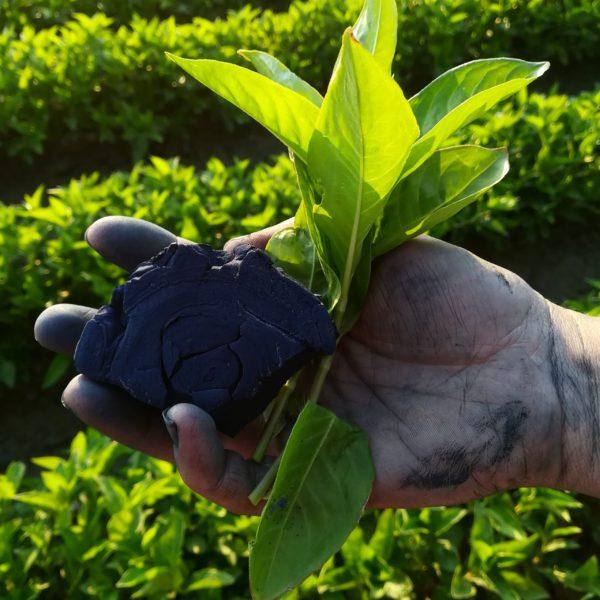 Photo d'une main tenant un bloc d'indigo ainsi qu'une feuille de persicaire à indigo avec en arrière plant des raies de plantes